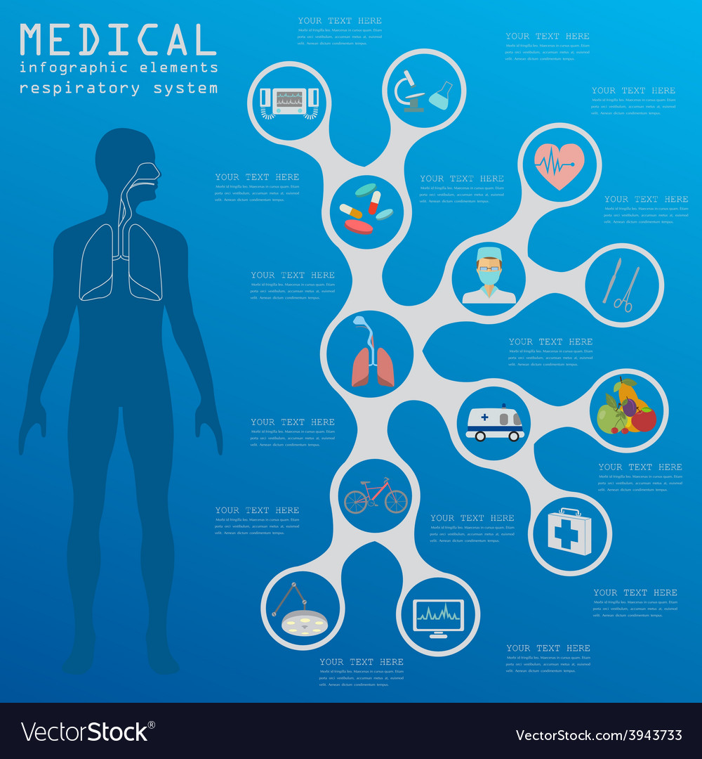 Medical and healthcare infographic respiratory vector | Price: 1 Credit (USD $1)