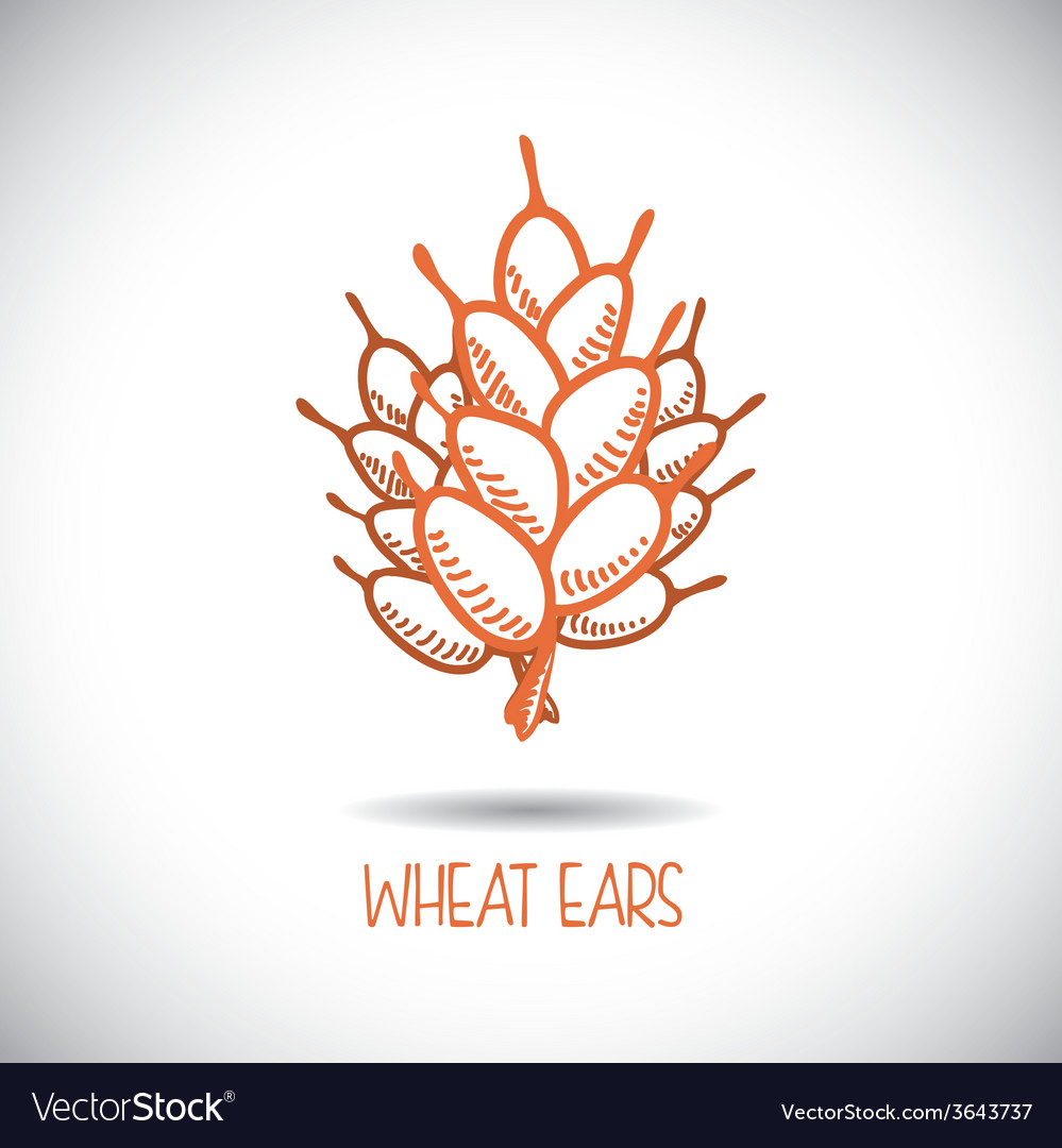 Wheat ear vector | Price: 1 Credit (USD $1)