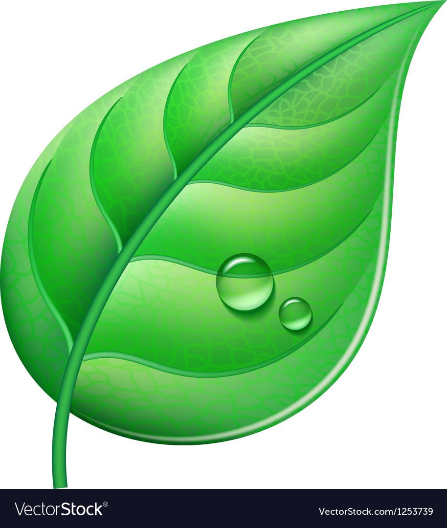 Green leaf vector | Price: 3 Credit (USD $3)