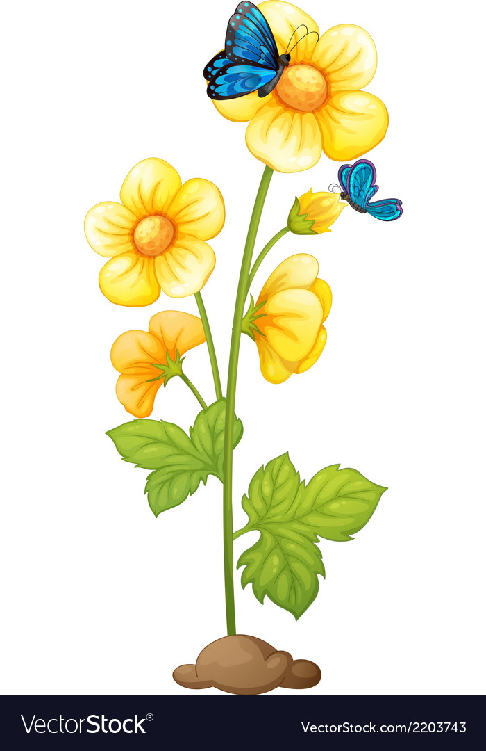 A plant with blooming yellow flowers vector | Price: 1 Credit (USD $1)