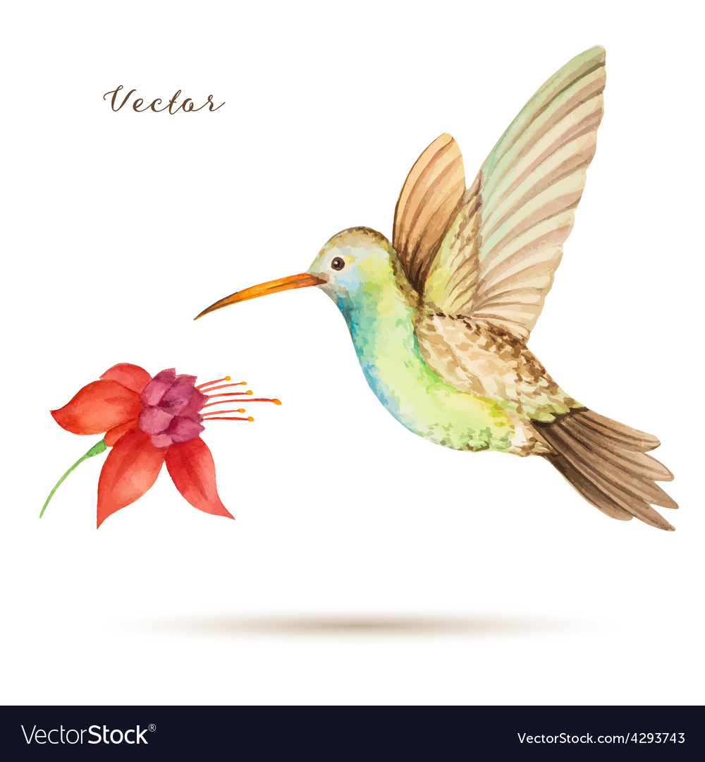 Hummingbird vector | Price: 1 Credit (USD $1)
