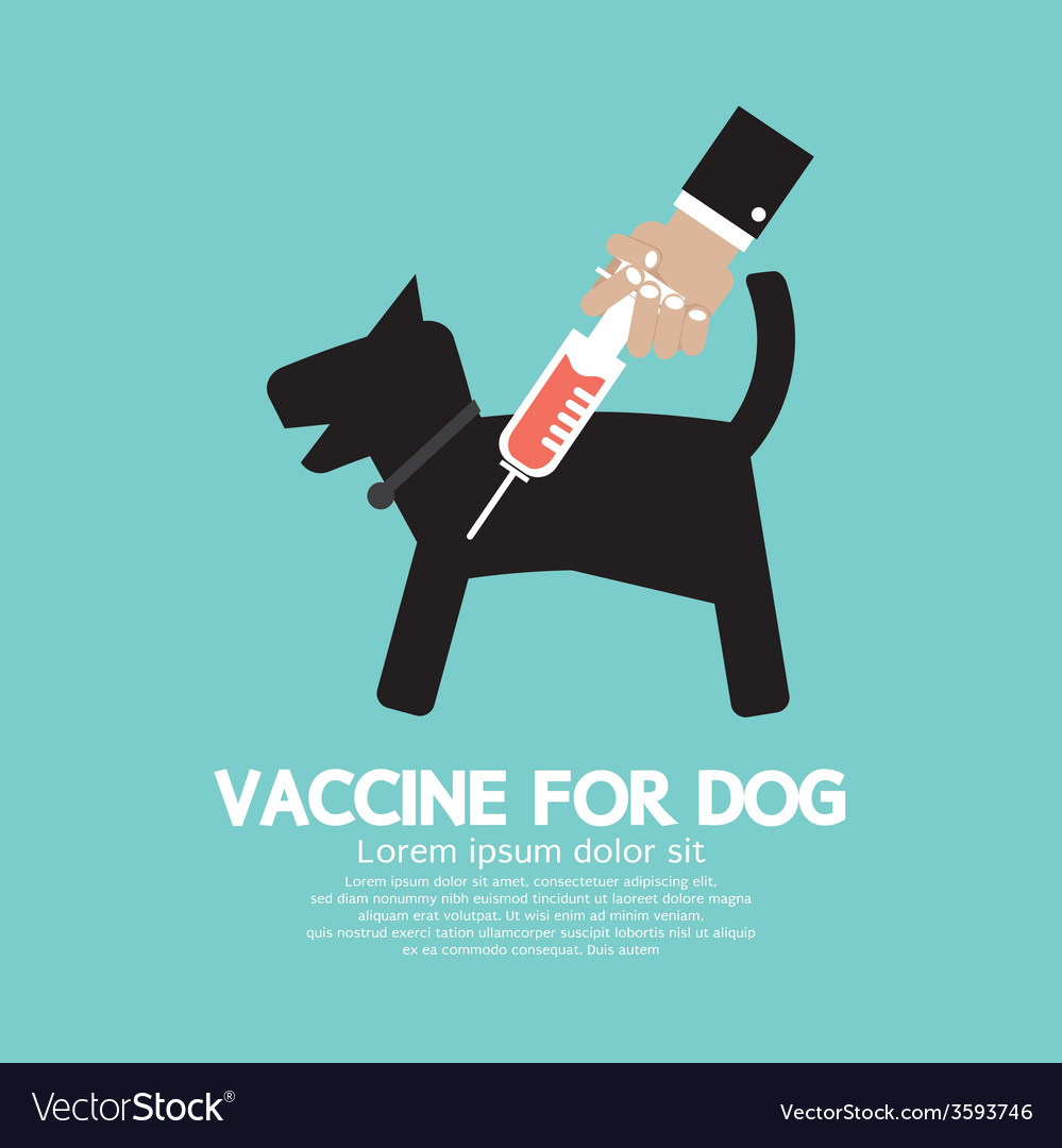 Dogs vaccine to prevent illness vector | Price: 1 Credit (USD $1)