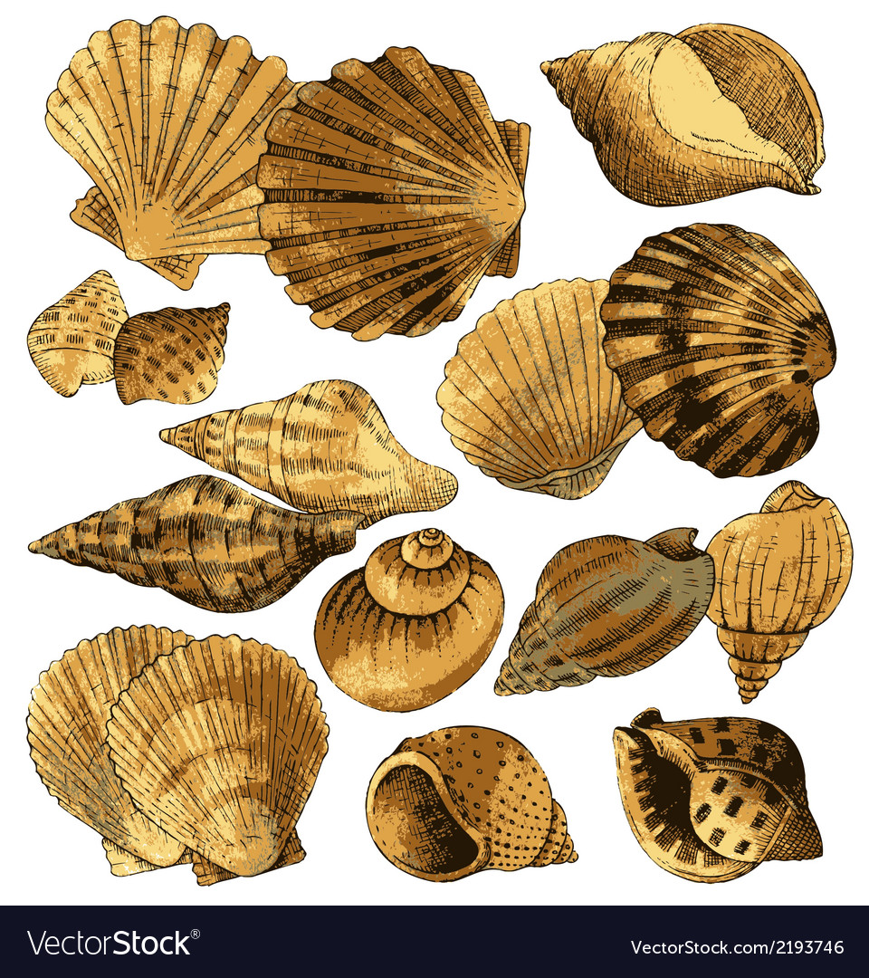 Seashell collection vector | Price: 1 Credit (USD $1)