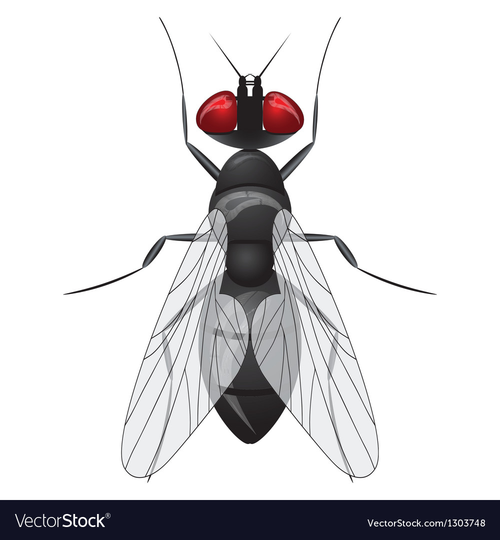 Fly insect sketch symbol vector | Price: 3 Credit (USD $3)