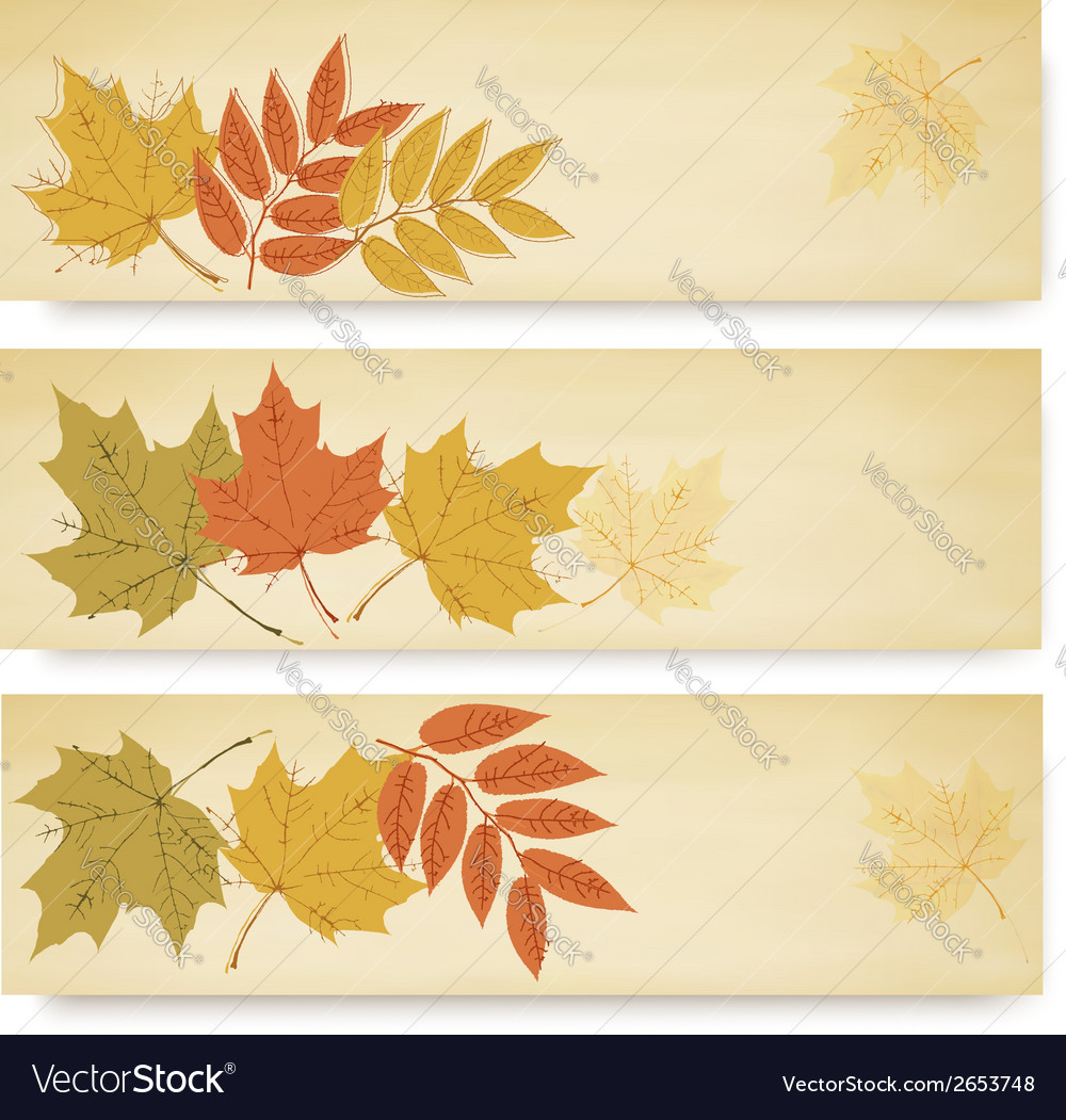 Three autumn banners with color leaves vector | Price: 1 Credit (USD $1)