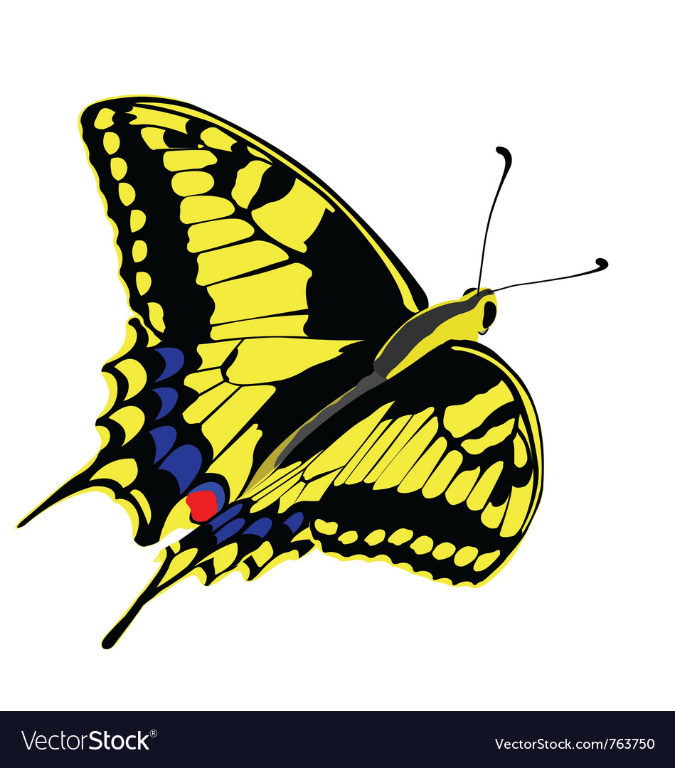 Machaon butterfly vector | Price: 1 Credit (USD $1)