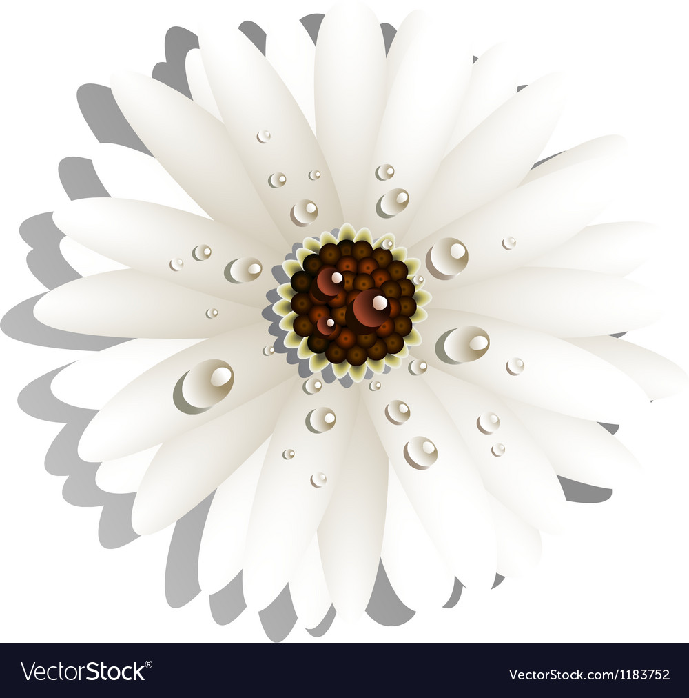 Gerbera vector | Price: 1 Credit (USD $1)