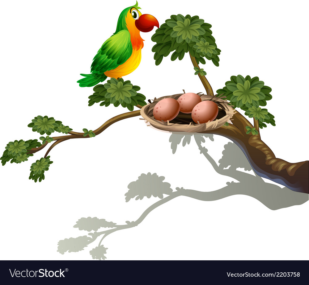 A parrot and a nest vector | Price: 1 Credit (USD $1)