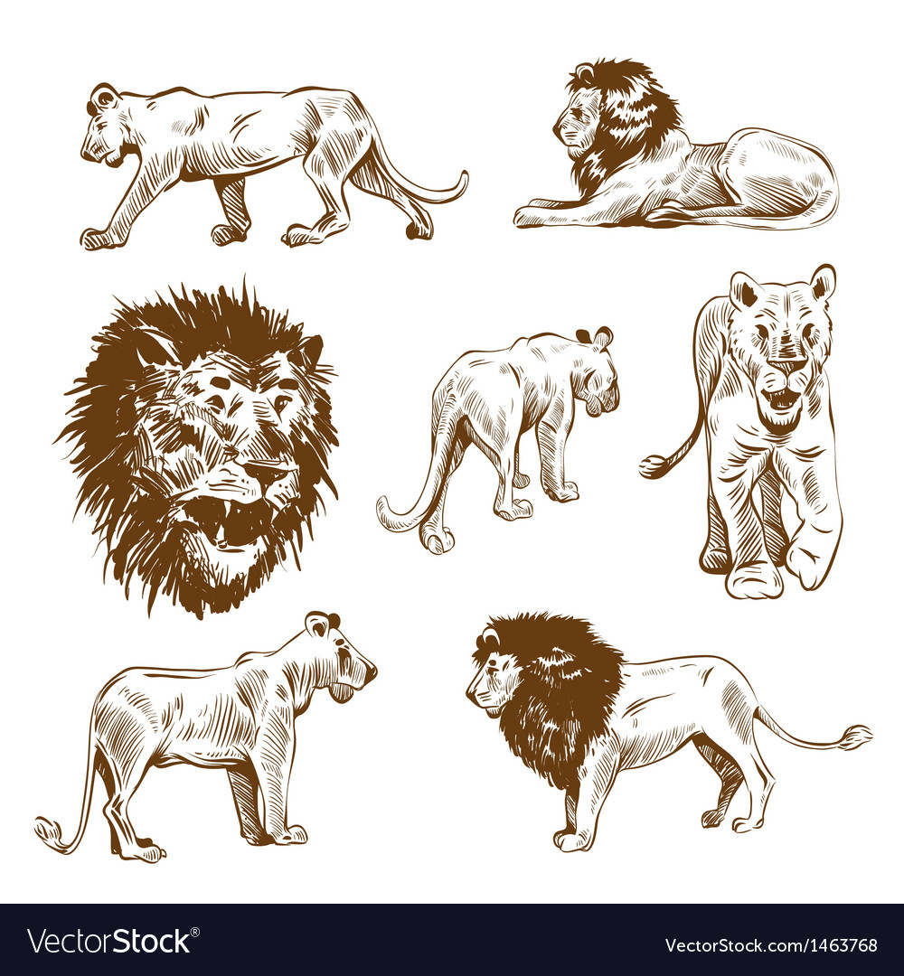 Hand drawn lion set vector | Price: 1 Credit (USD $1)