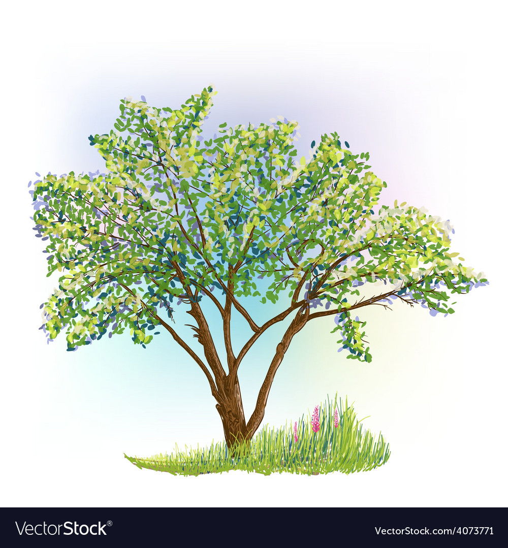 Tree grass spring vector | Price: 1 Credit (USD $1)