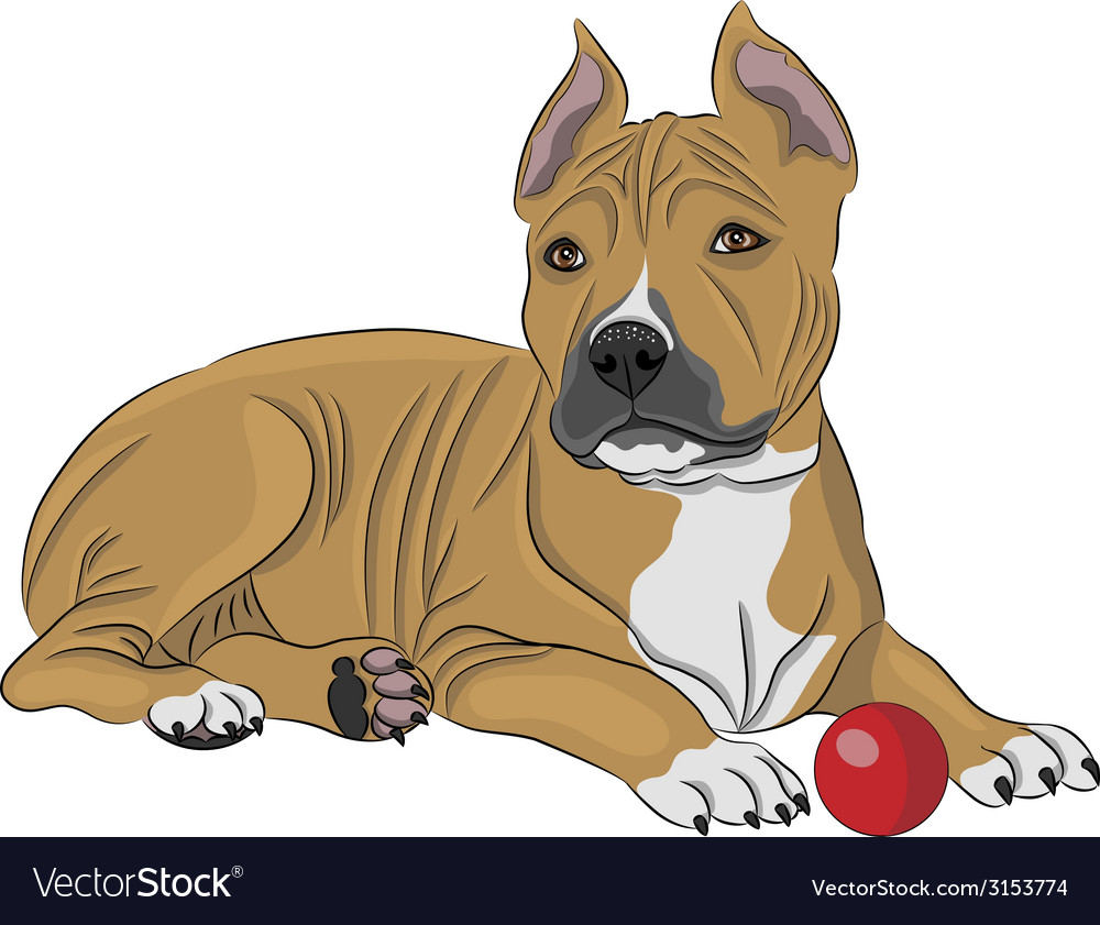American staffordshire terrier a vector | Price: 1 Credit (USD $1)