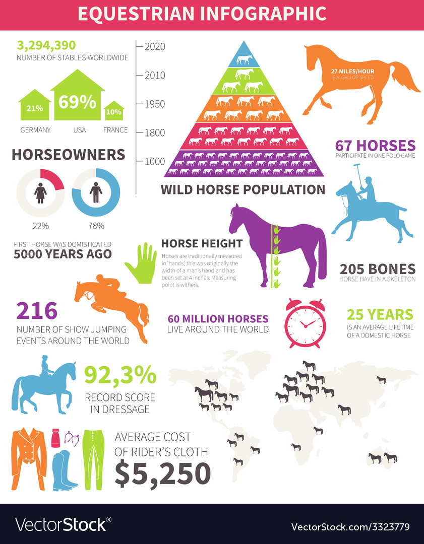 Equestrian infographic vector | Price: 1 Credit (USD $1)