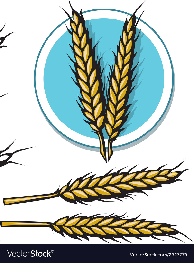 Grain icon vector | Price: 1 Credit (USD $1)
