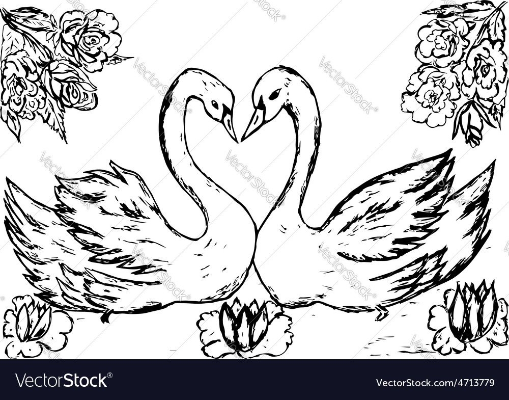 Swans in the pond sketch vector | Price: 1 Credit (USD $1)
