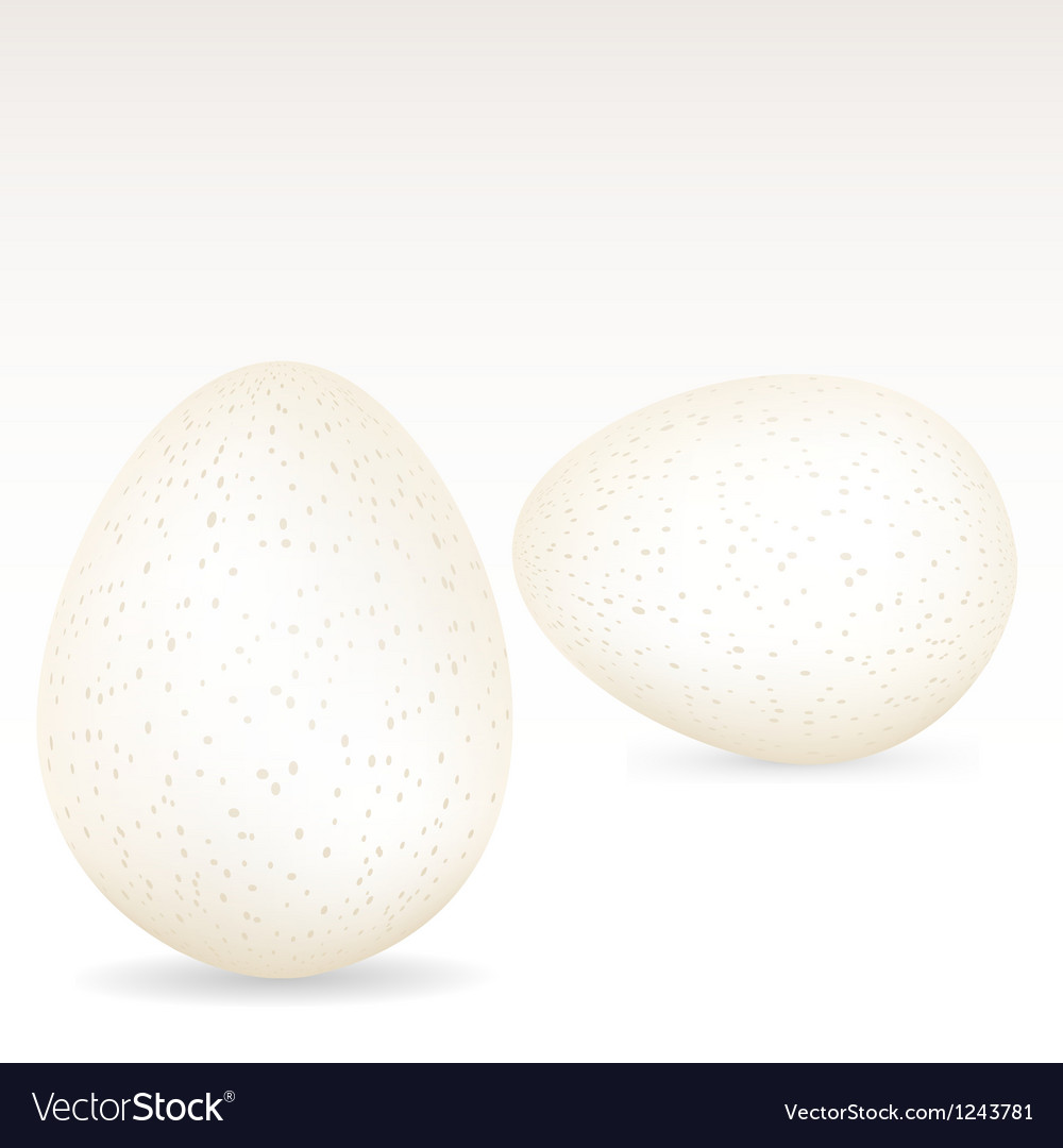 White speckled eggs vector | Price: 1 Credit (USD $1)
