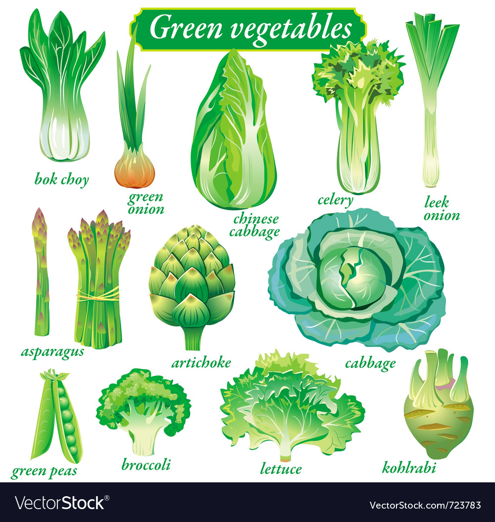 Green vegetables vector | Price: 3 Credit (USD $3)