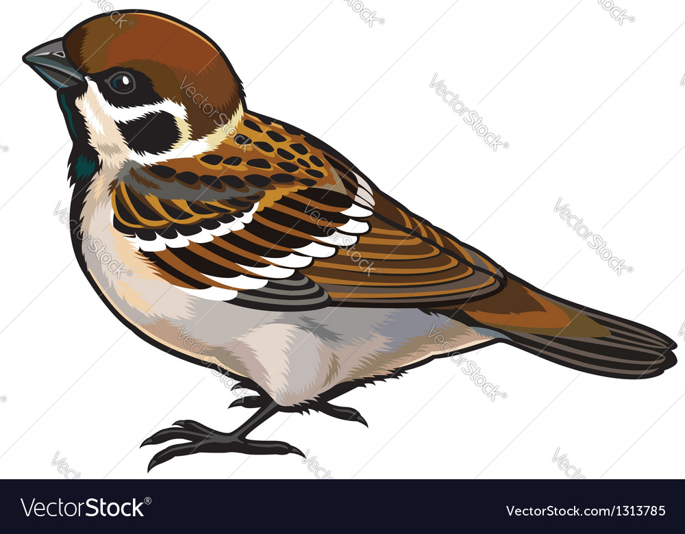Tree sparrow vector | Price: 1 Credit (USD $1)
