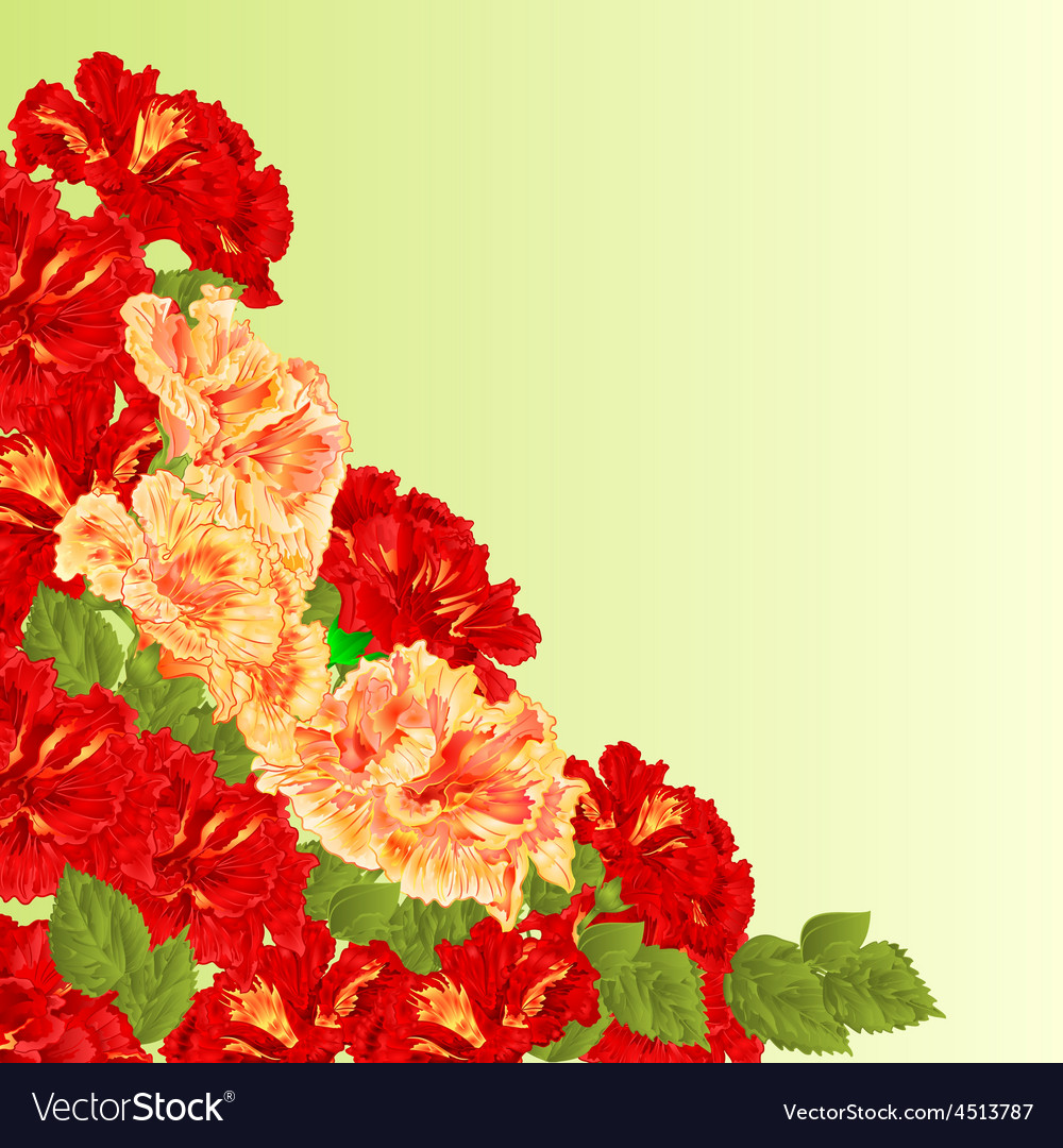 Flowering shrub red and yellow hibiscus vector | Price: 1 Credit (USD $1)