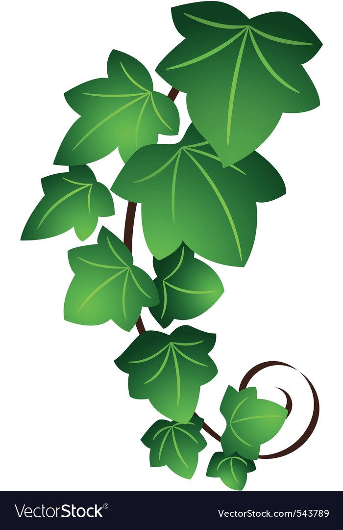 Ivy twig vector | Price: 1 Credit (USD $1)