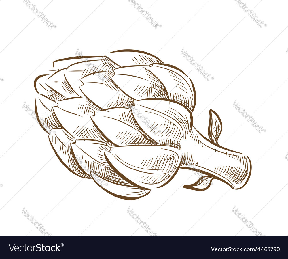 Picture of artichoke vector | Price: 1 Credit (USD $1)