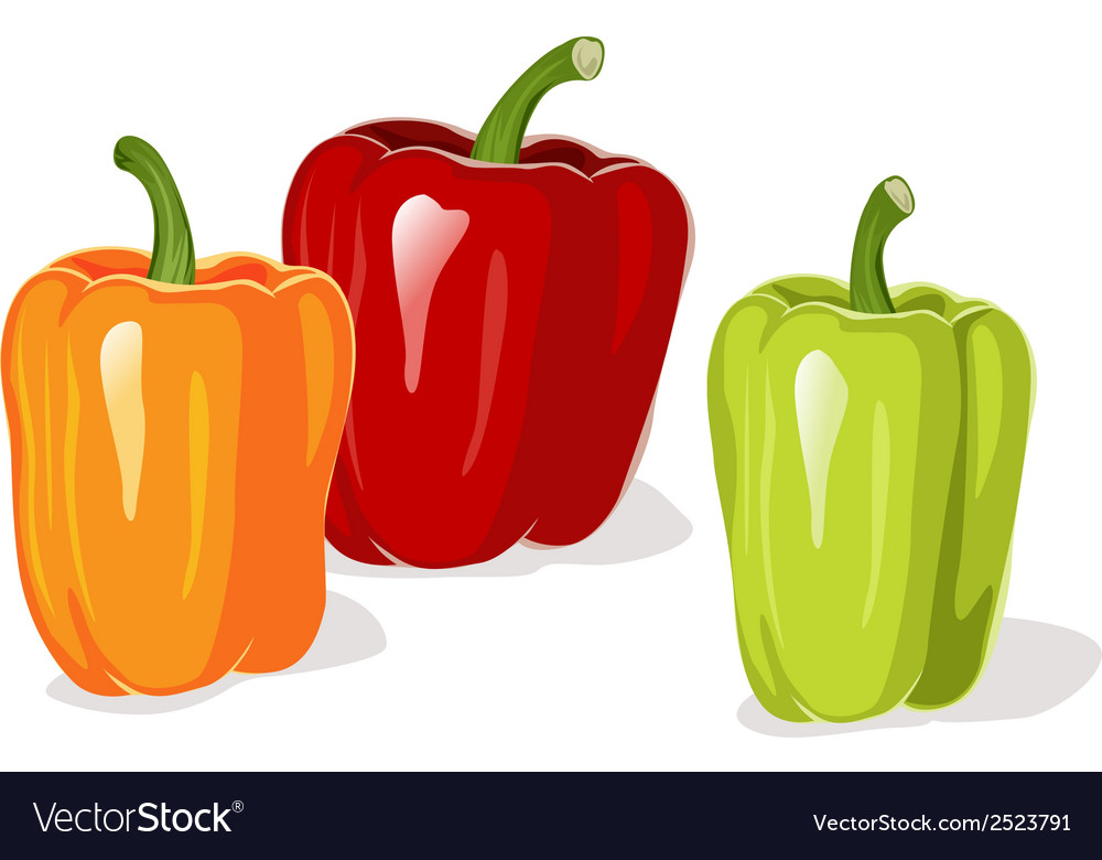 Colored pepper vector | Price: 1 Credit (USD $1)