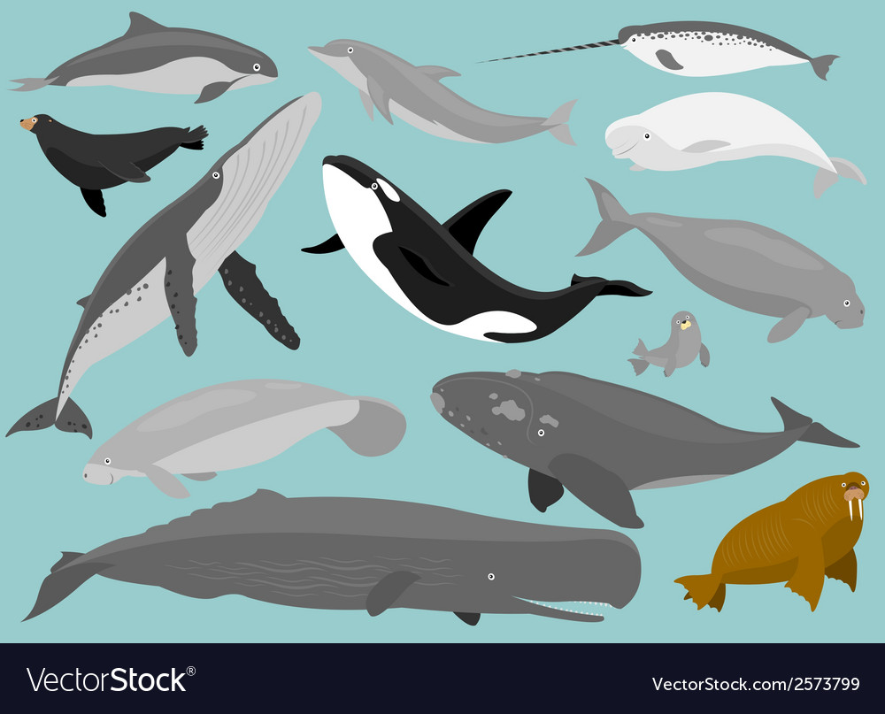 Marine mammals vector | Price: 1 Credit (USD $1)