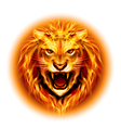 Head of fire lion vector