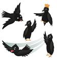 Crows vector