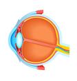 Cross section of human eye vector