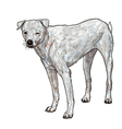 White slim dog vector