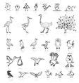 Sketch of funny birds for your design vector