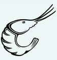 Boiled shrimp sketch vector
