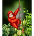 Monkey in jungle vector