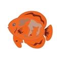 Orange fish isolated on white background  e vector