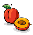 Peach fruits sketch drawing vector
