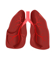 Lungs anatomy vector