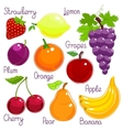 Selection of colorful tropical fruit with labels vector