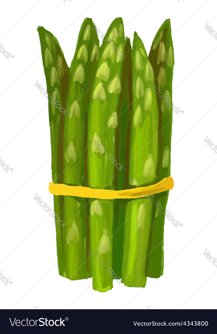 Picture of asparagus vector | Price: 3 Credit (USD $3)