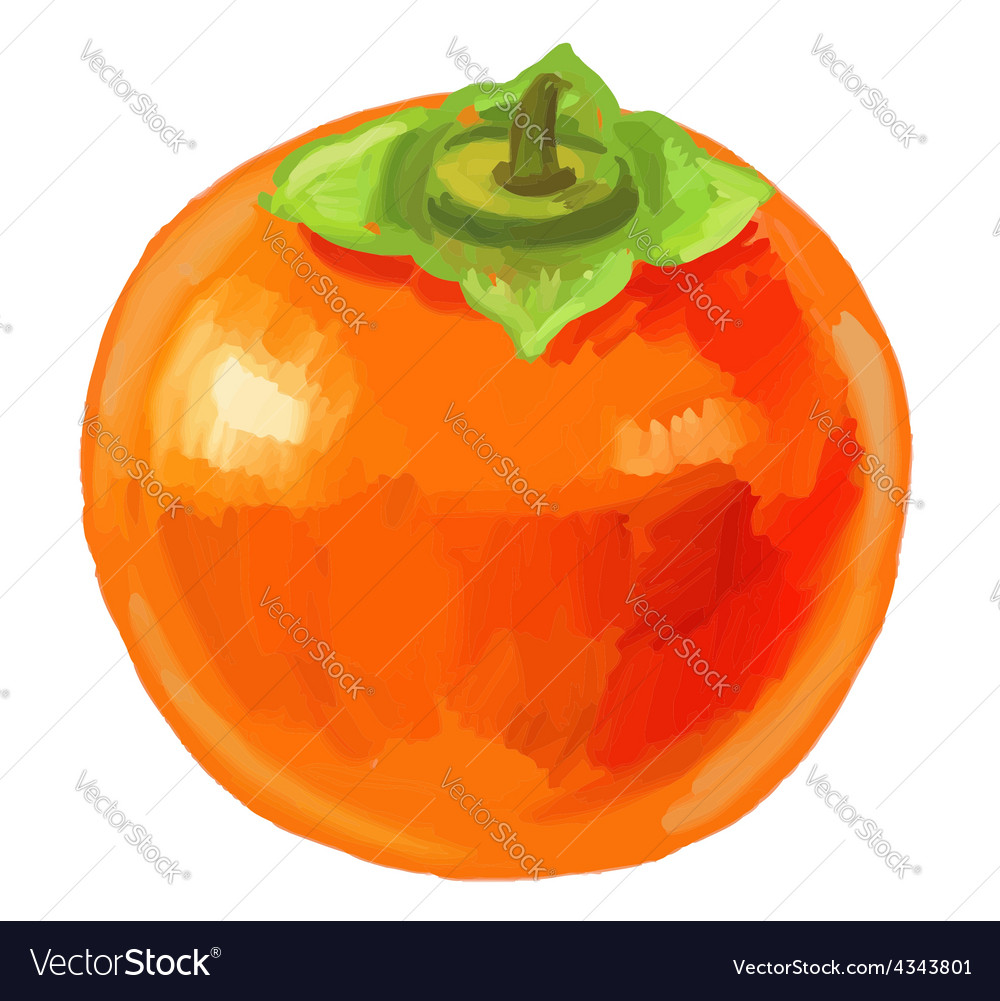 Picture of fruit persimmon vector | Price: 3 Credit (USD $3)