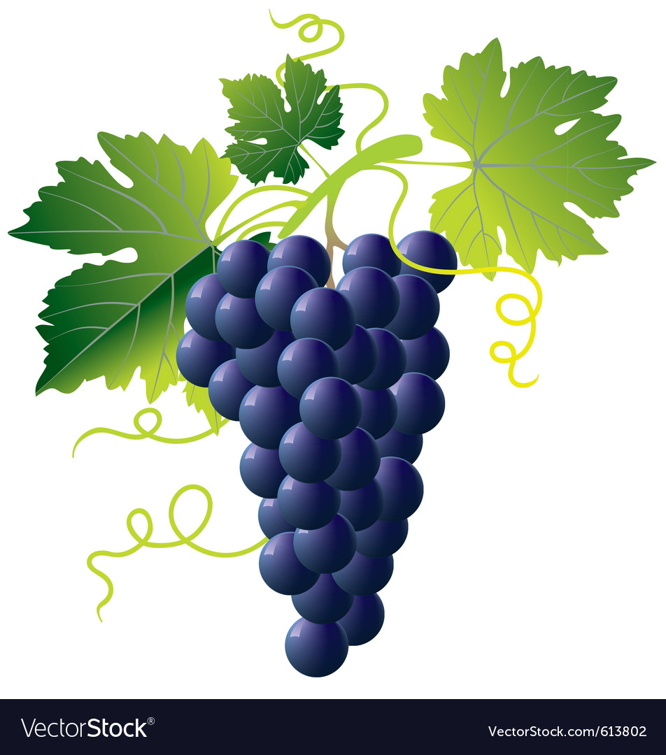 Grape cartoons vector