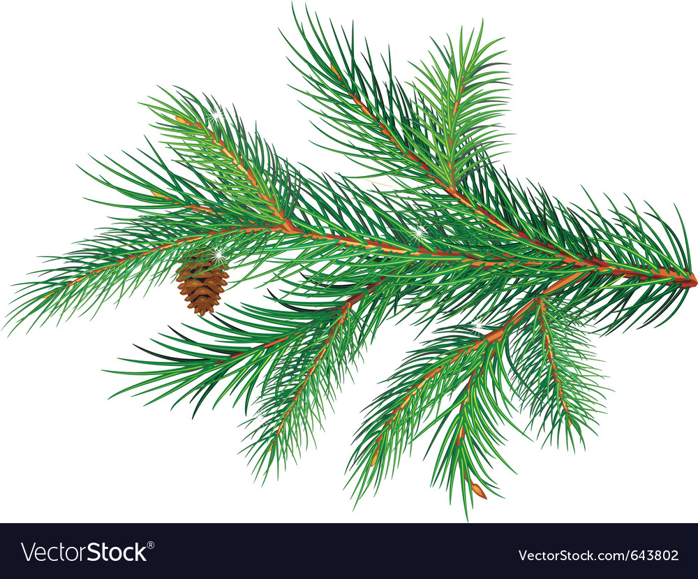 Pine branch vector | Price: 1 Credit (USD $1)