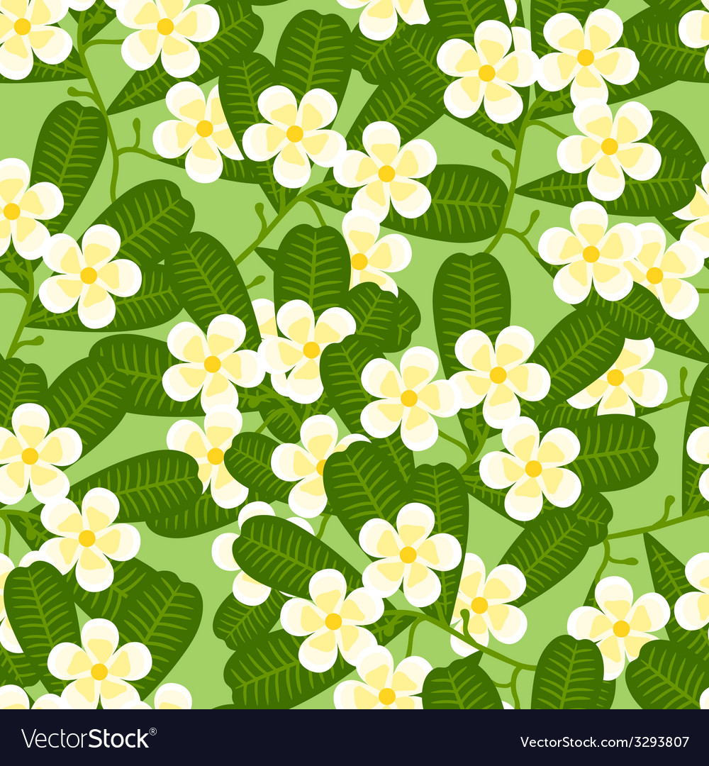 Seamless tropical pattern with stylized plumeria vector | Price: 1 Credit (USD $1)