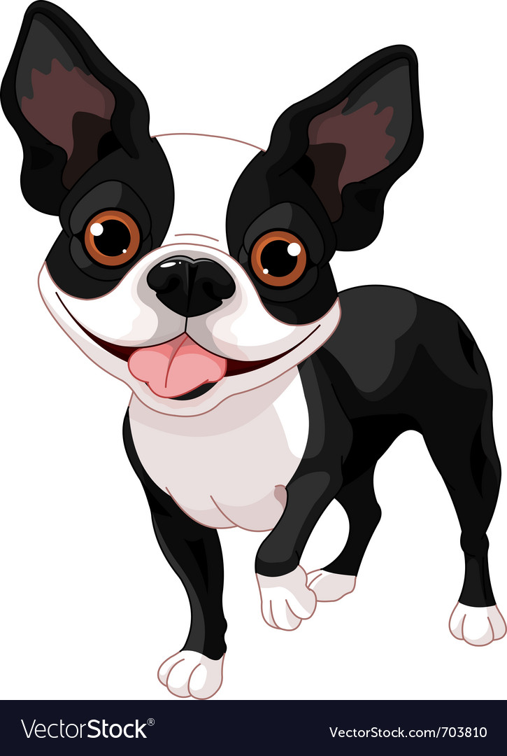 Boston terrier vector | Price: 3 Credit (USD $3)