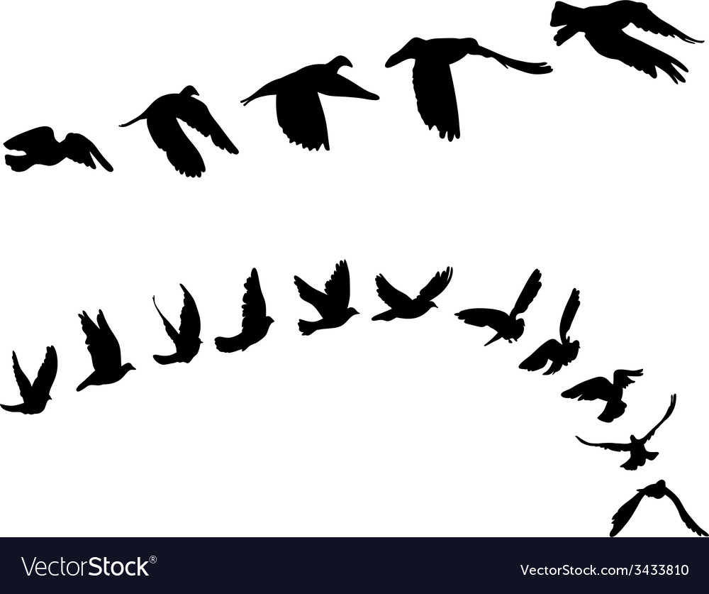 Doves and pigeons set for peace concept and vector | Price: 1 Credit (USD $1)