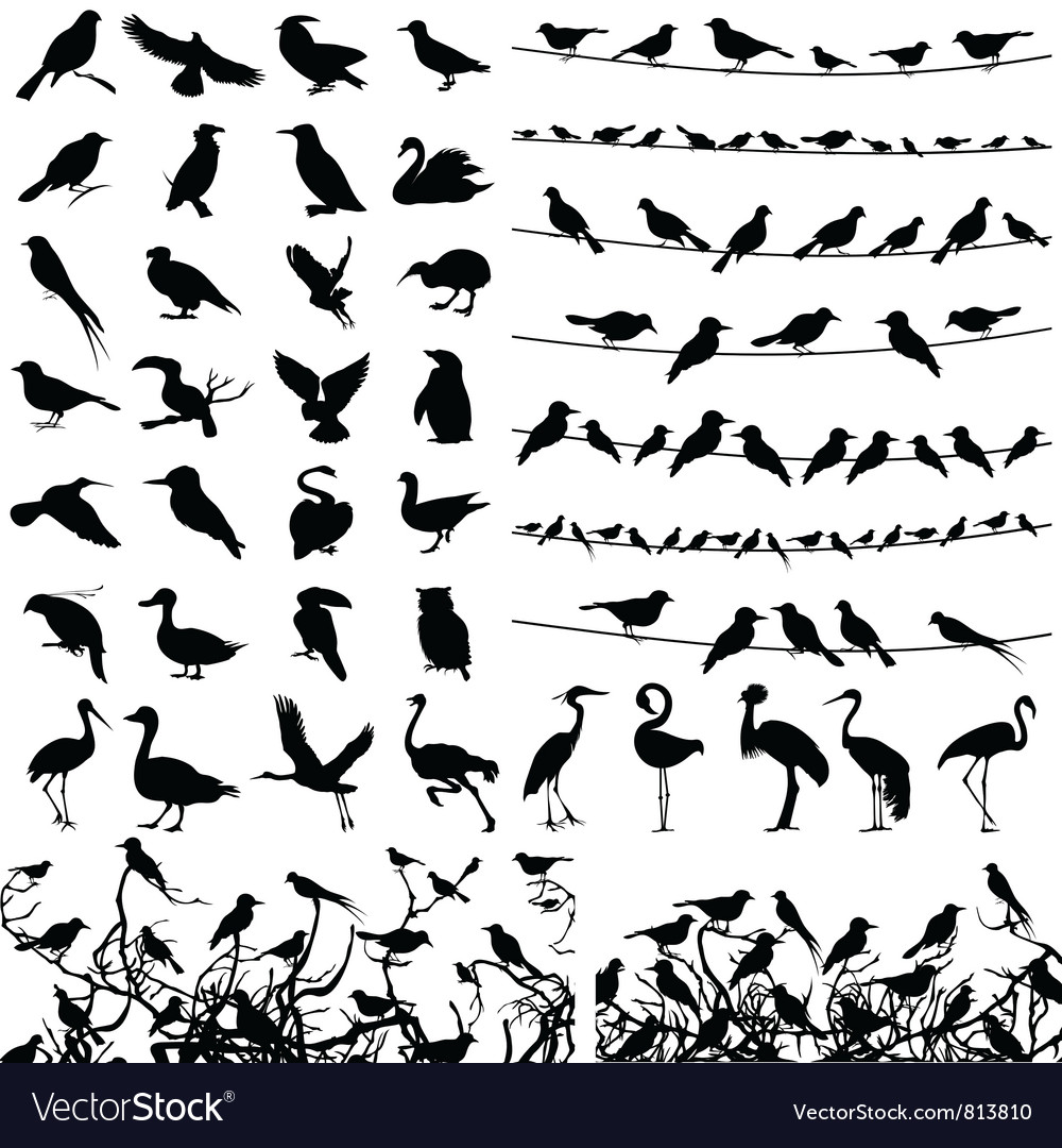 Silhouette of birds vector | Price: 1 Credit (USD $1)