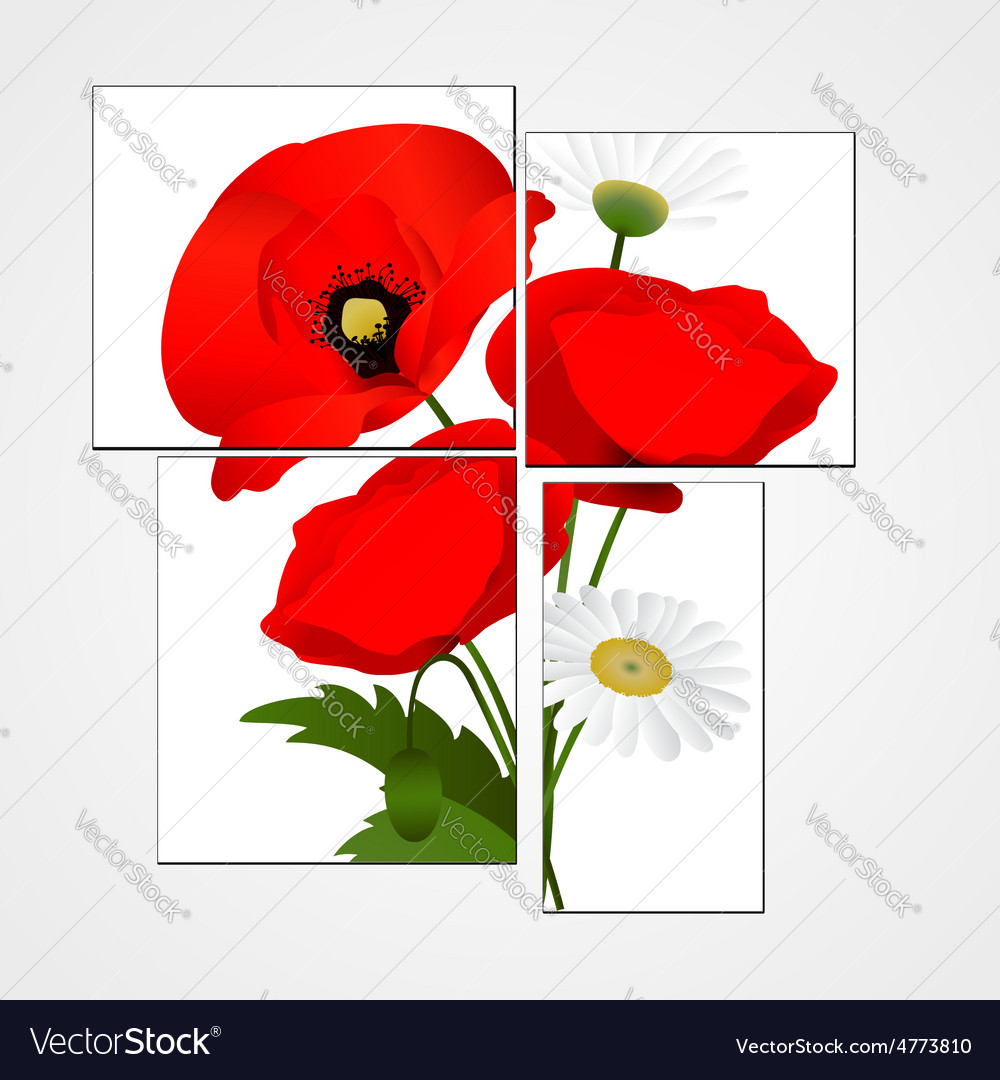 White background with chamomile and poppies vector | Price: 1 Credit (USD $1)