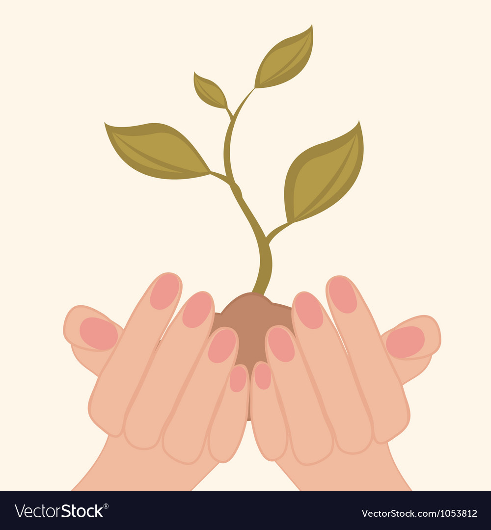 Green plant in hands vector | Price: 1 Credit (USD $1)