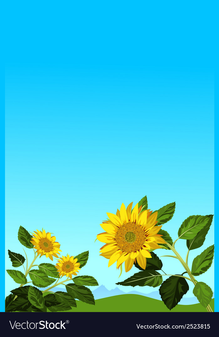 Sunflowers vector | Price: 1 Credit (USD $1)