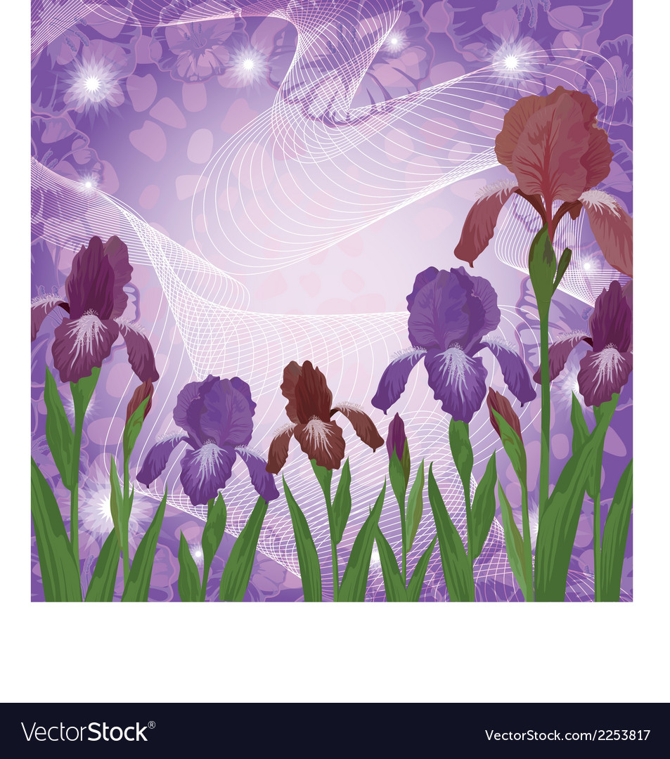 Flowers iris and ipomoea contours vector | Price: 1 Credit (USD $1)