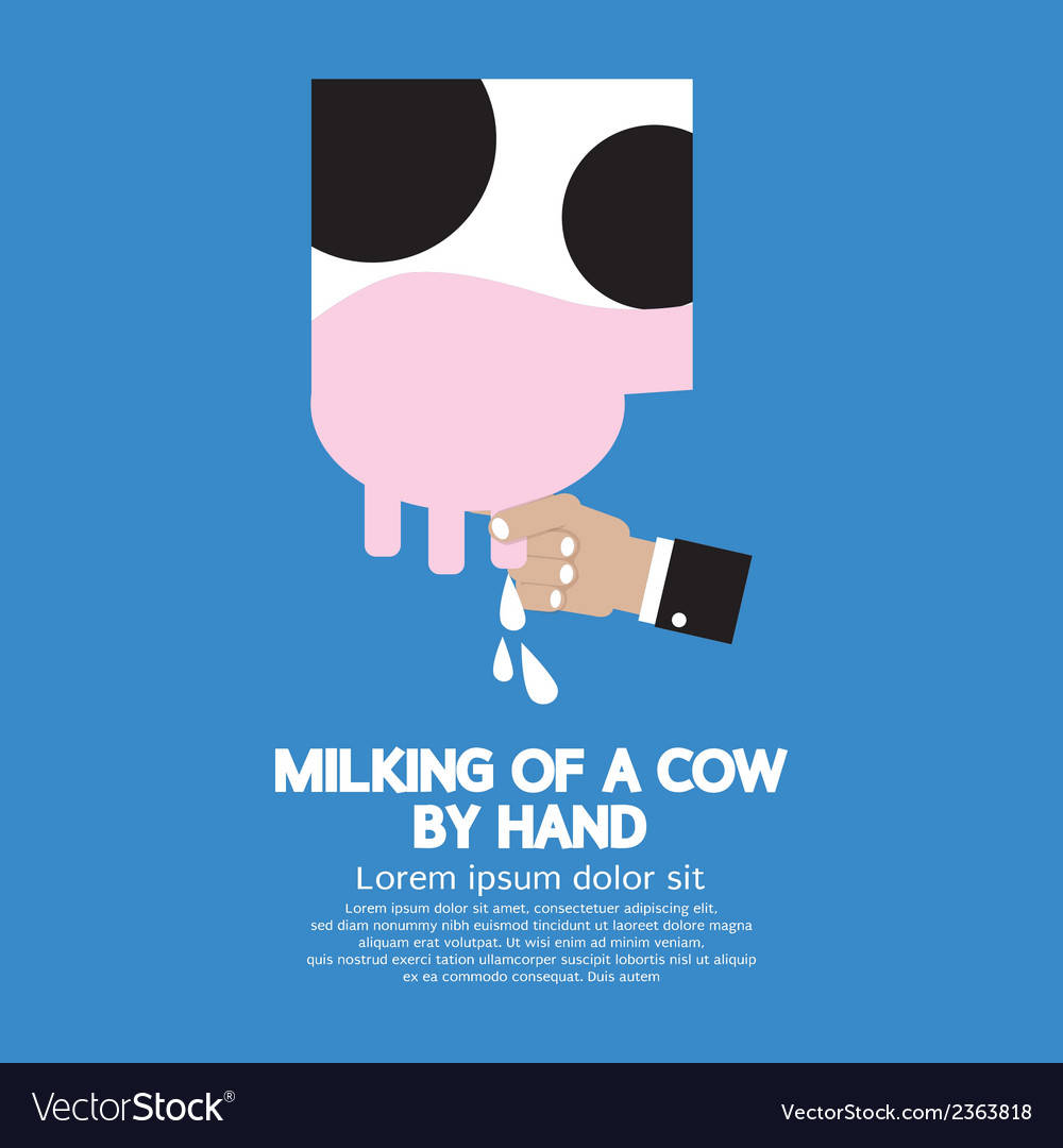 Milking of a cow vector | Price: 1 Credit (USD $1)